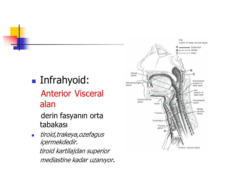 Infrahyoid: Anterior Visceral alan derin fasyanın orta tabakası