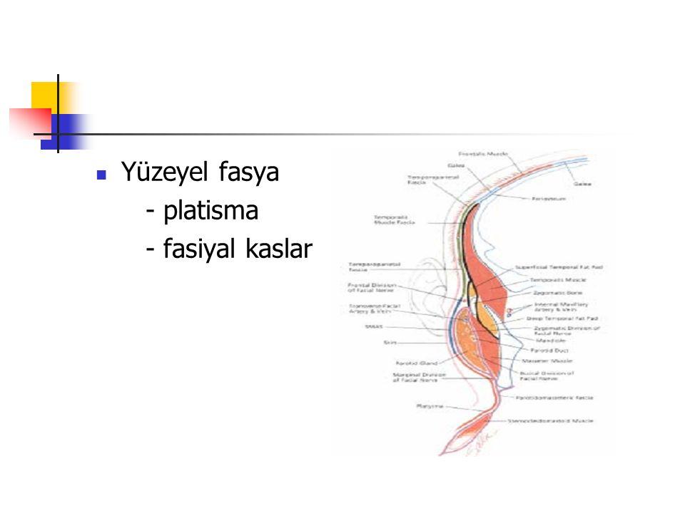 Yüzeyel fasya - platisma - fasiyal kaslar