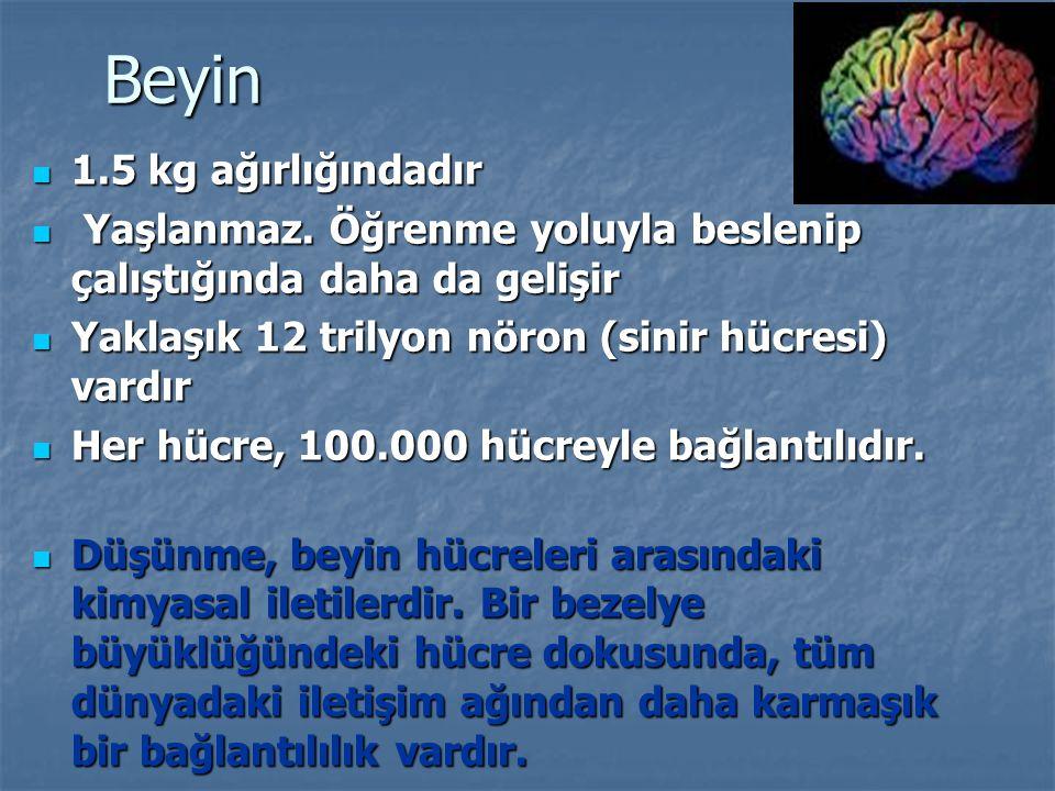 Beyin 1.5 kg ağırlığındadır