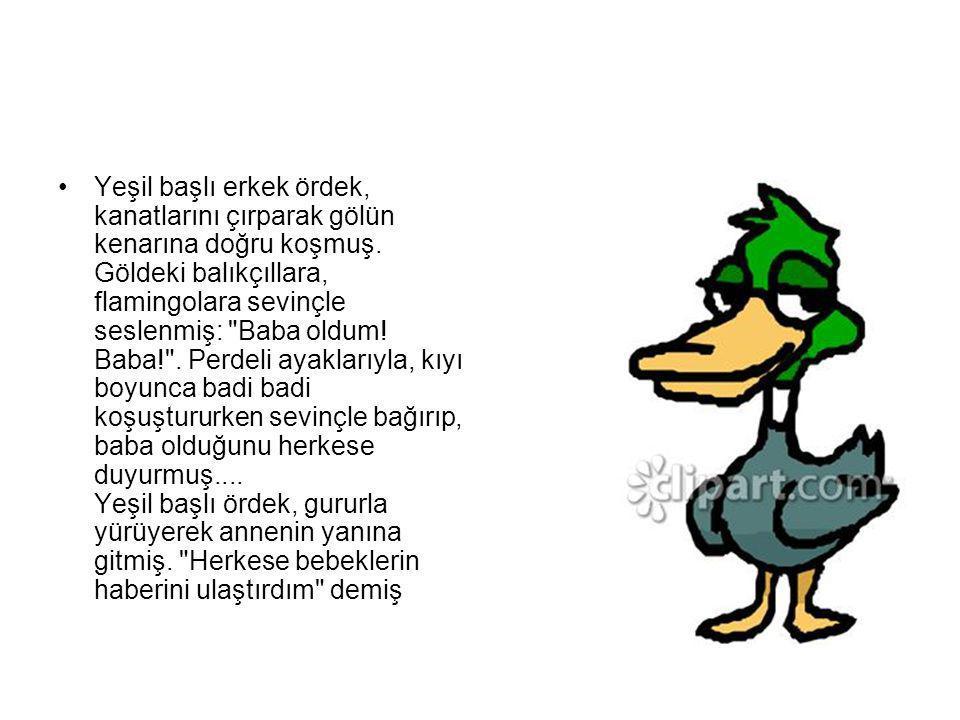 Yeşil başlı erkek ördek, kanatlarını çırparak gölün kenarına doğru koşmuş.