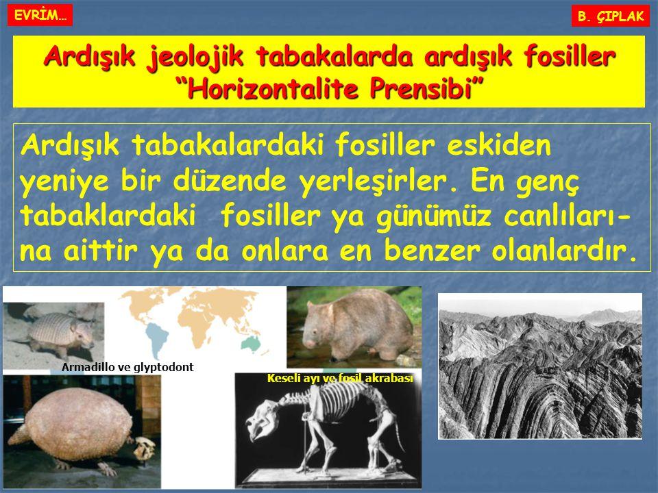 EVRİM… B. ÇIPLAK. Ardışık jeolojik tabakalarda ardışık fosiller. Horizontalite Prensibi