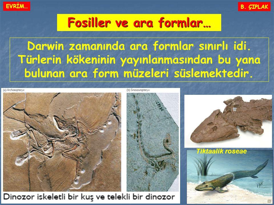 Fosiller ve ara formlar…