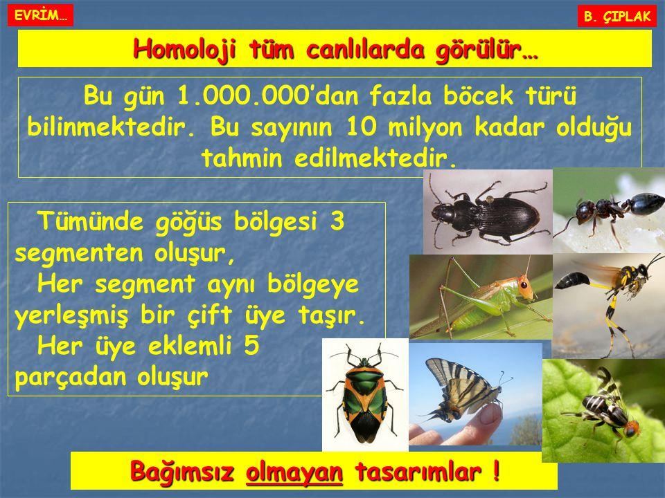 Homoloji tüm canlılarda görülür… Bağımsız olmayan tasarımlar !