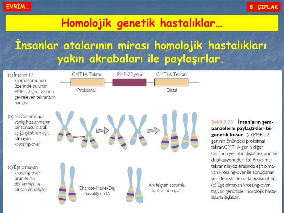 Homolojik genetik hastalıklar…
