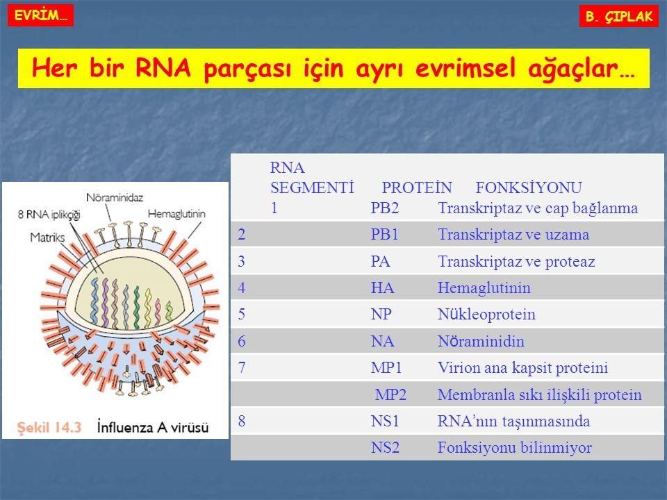 Her bir RNA parçası için ayrı evrimsel ağaçlar…