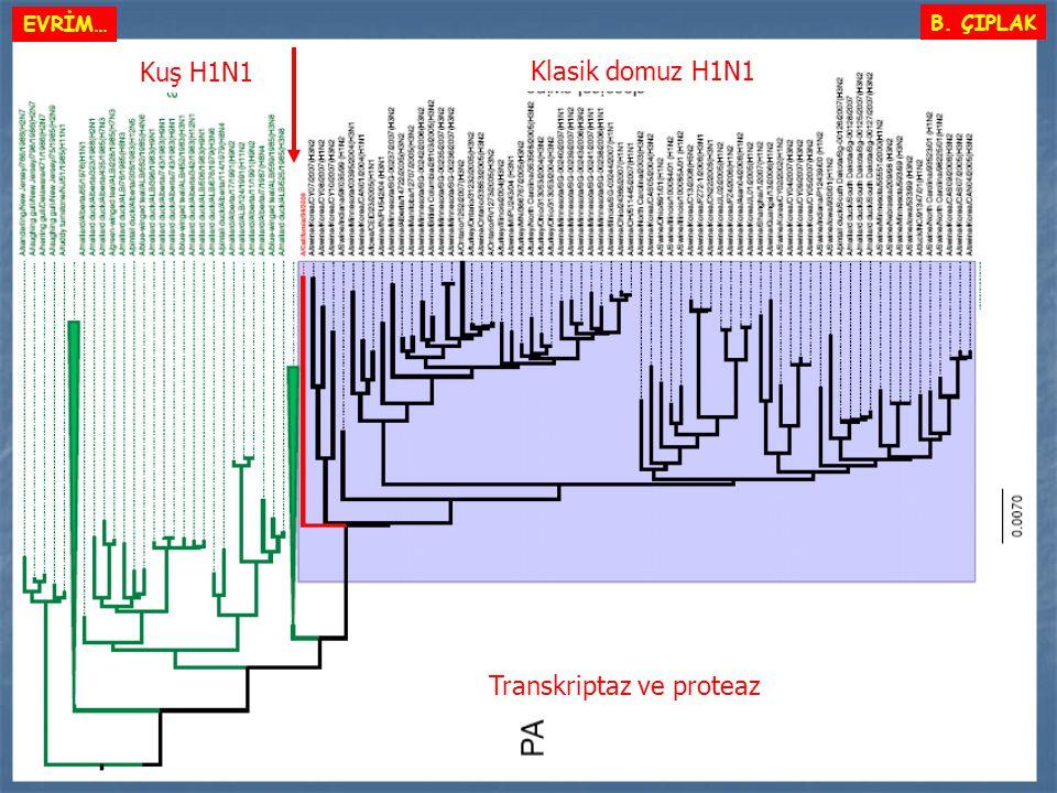 Transkriptaz ve proteaz