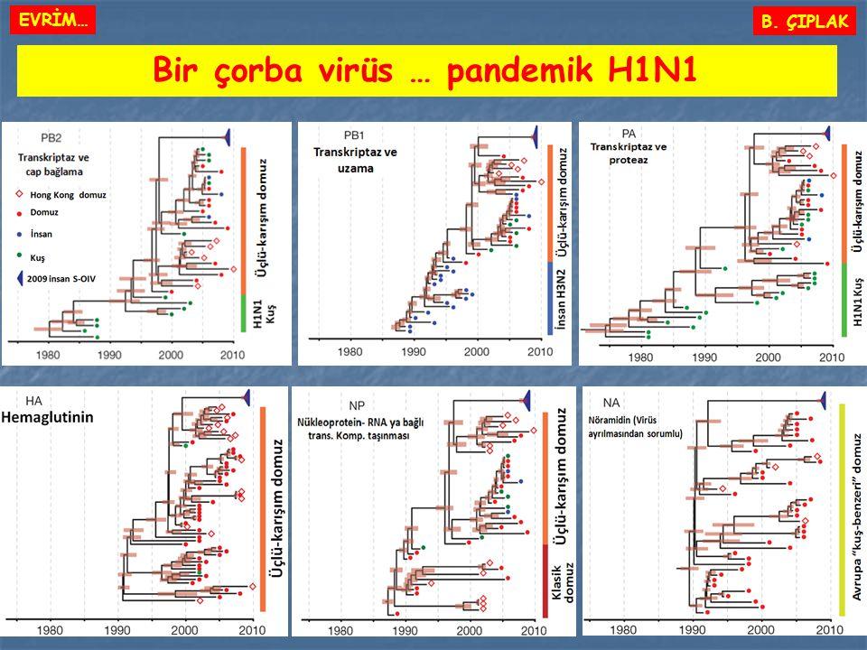 Bir çorba virüs … pandemik H1N1