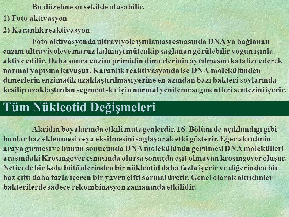 Tüm Nükleotid Değişmeleri