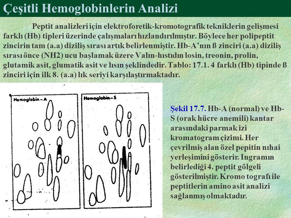 Çeşitli Hemoglobinlerin Analizi