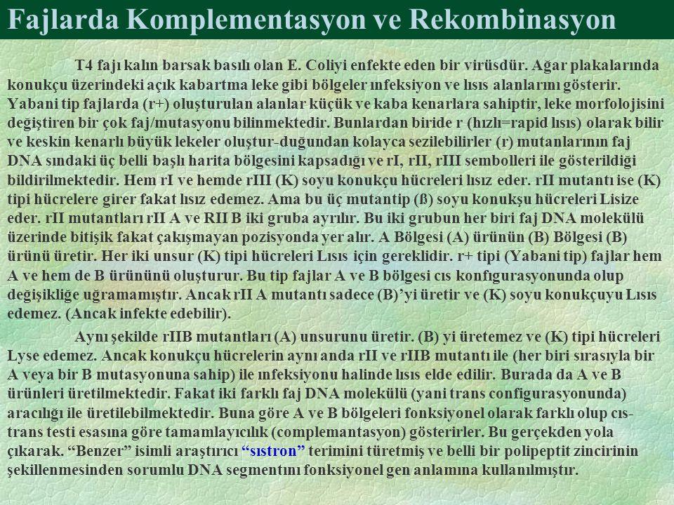 Fajlarda Komplementasyon ve Rekombinasyon