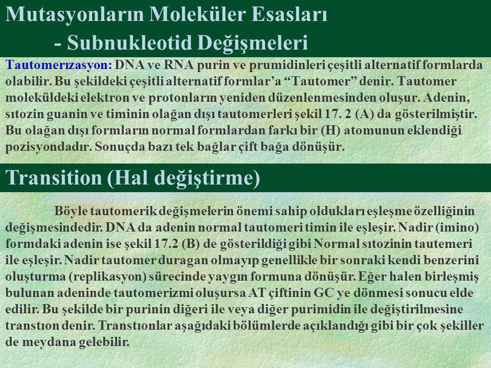 Mutasyonların Moleküler Esasları