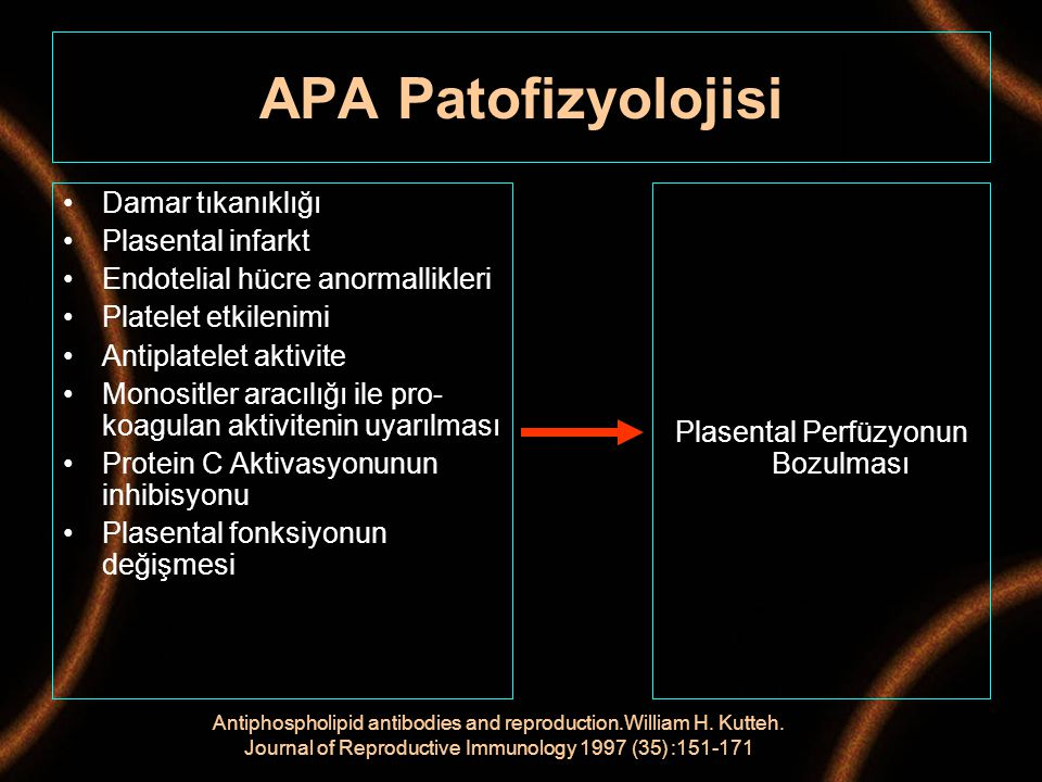 APA Patofizyolojisi Damar tıkanıklığı Plasental infarkt