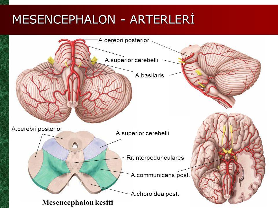 MESENCEPHALON - ARTERLERİ