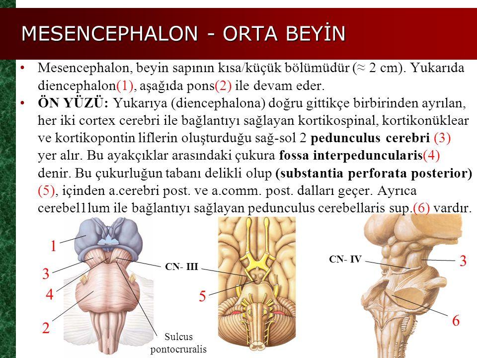 MESENCEPHALON - ORTA BEYİN