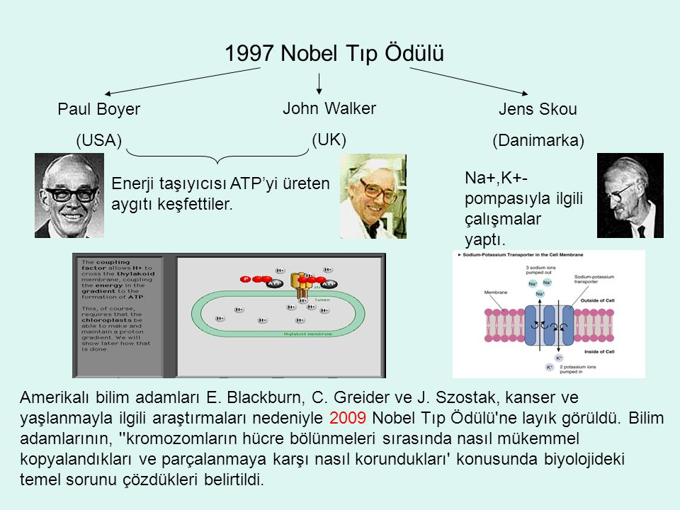 1997 Nobel Tıp Ödülü Paul Boyer (USA) John Walker (UK) Jens Skou