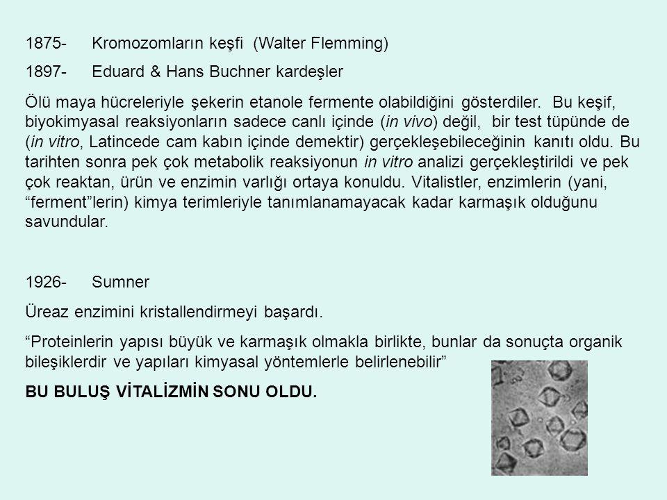 1875- Kromozomların keşfi (Walter Flemming)