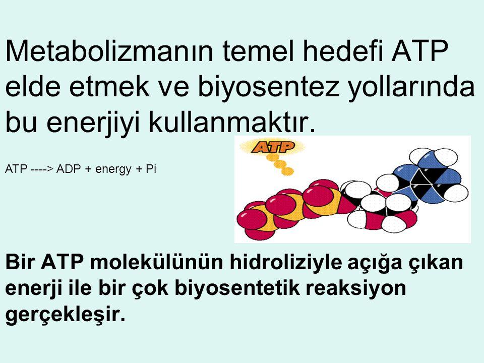 Metabolizmanın temel hedefi ATP elde etmek ve biyosentez yollarında bu enerjiyi kullanmaktır.