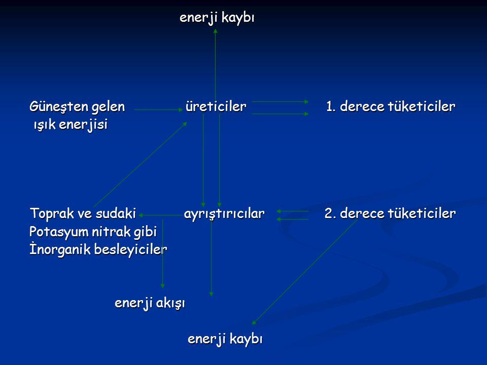 enerji kaybı Güneşten gelen üreticiler 1. derece tüketiciler. ışık enerjisi.
