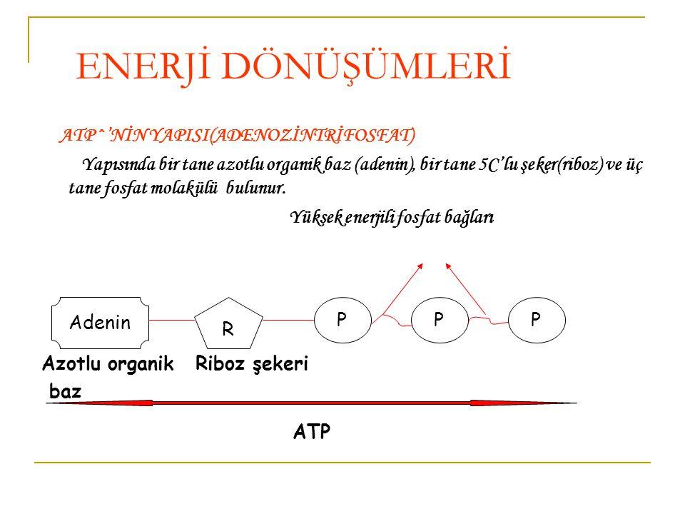 ENERJİ DÖNÜŞÜMLERİ ATP^'NİN YAPISI(ADENOZİNTRİFOSFAT)