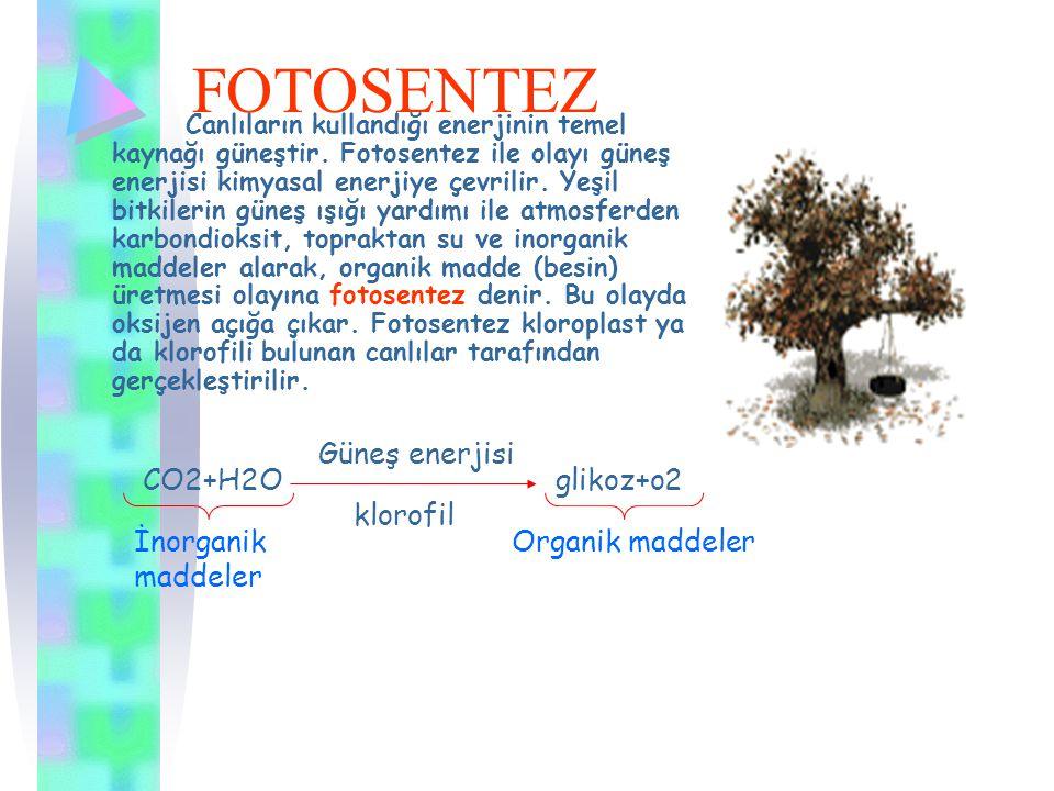 FOTOSENTEZ Güneş enerjisi CO2+H2O glikoz+o2 klorofil İnorganik