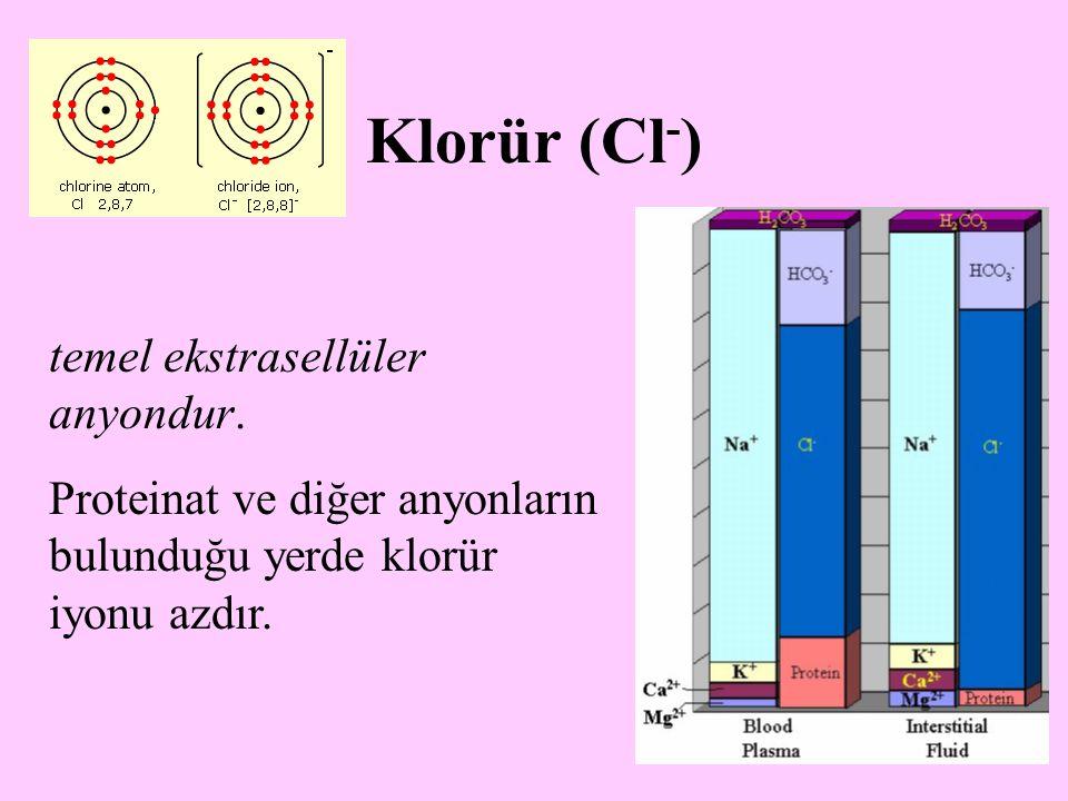 Klorür (Cl-) temel ekstrasellüler anyondur.