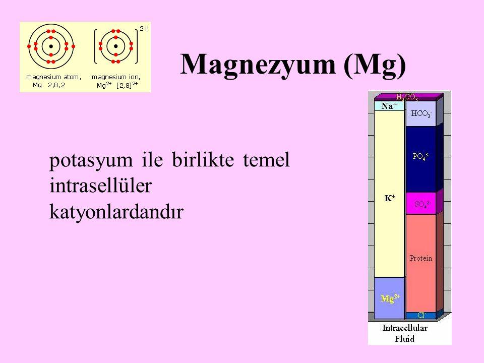 Magnezyum (Mg) potasyum ile birlikte temel intrasellüler katyonlardandır