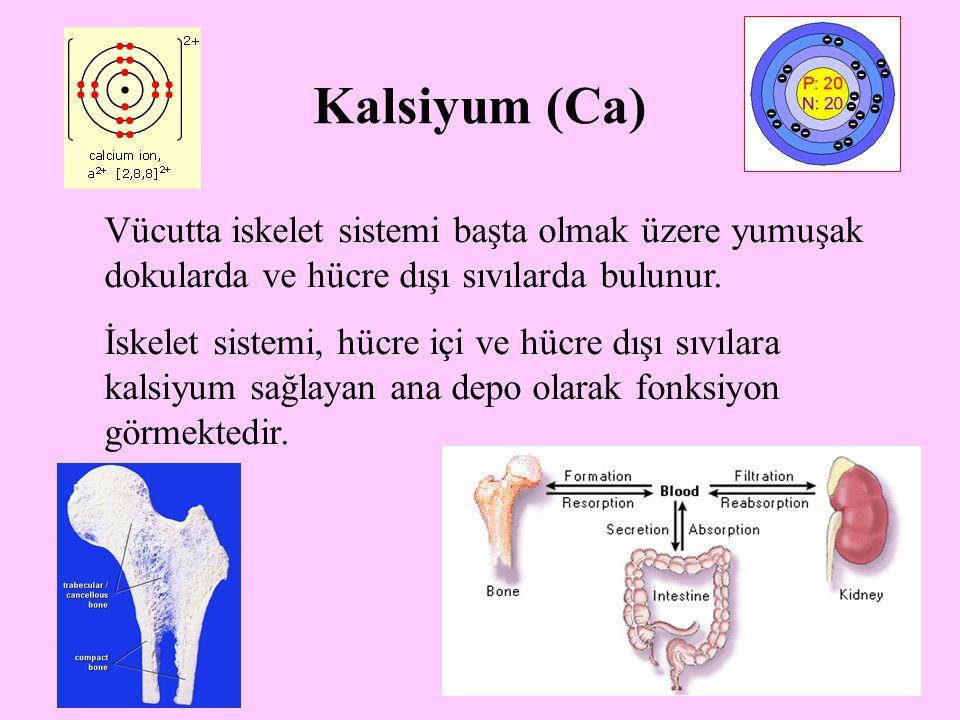 Kalsiyum (Ca) Vücutta iskelet sistemi başta olmak üzere yumuşak dokularda ve hücre dışı sıvılarda bulunur.
