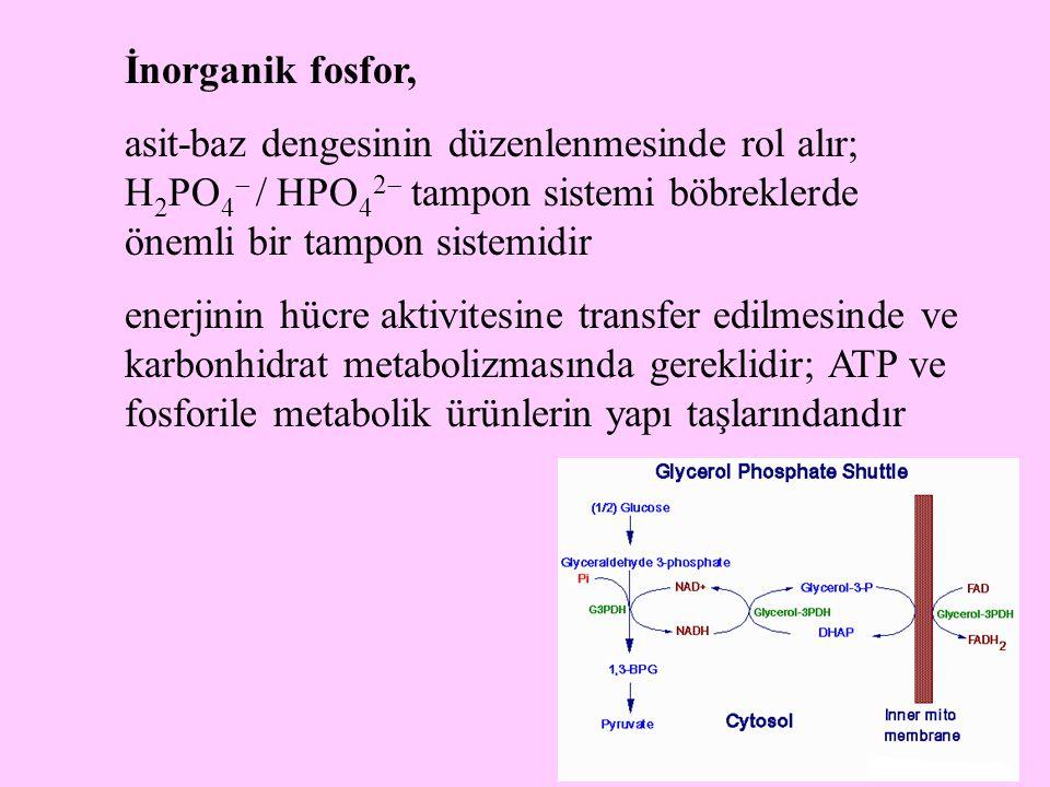 İnorganik fosfor, asit-baz dengesinin düzenlenmesinde rol alır; H2PO4 / HPO42 tampon sistemi böbreklerde önemli bir tampon sistemidir.