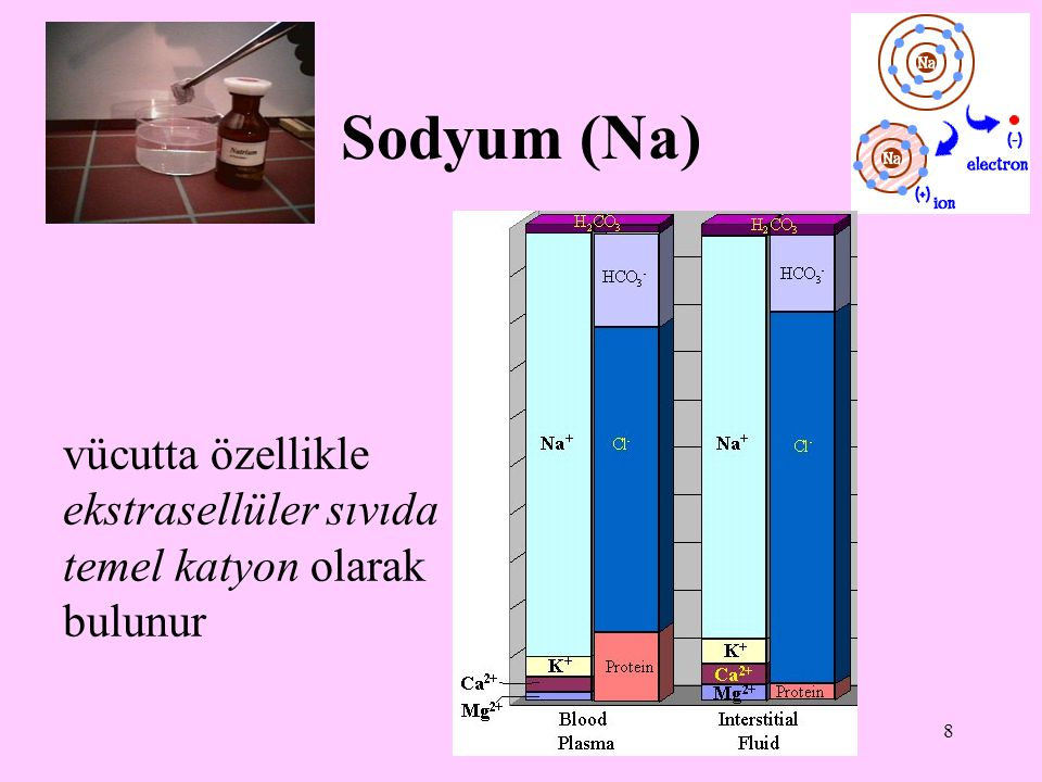 Sodyum (Na) vücutta özellikle ekstrasellüler sıvıda temel katyon olarak bulunur