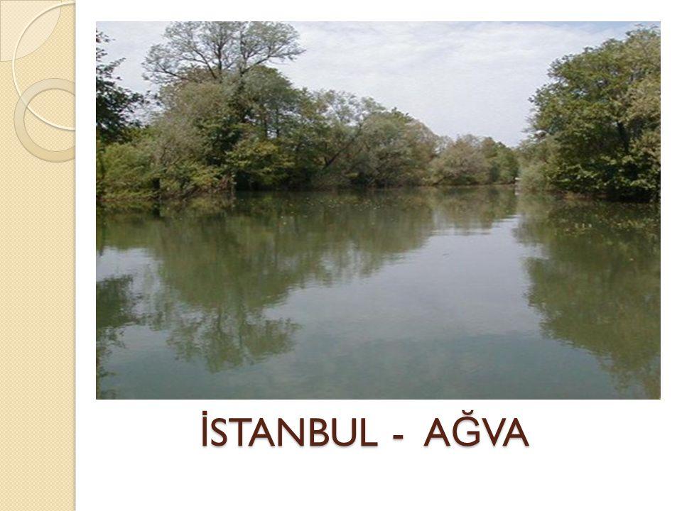 İSTANBUL - AĞVA