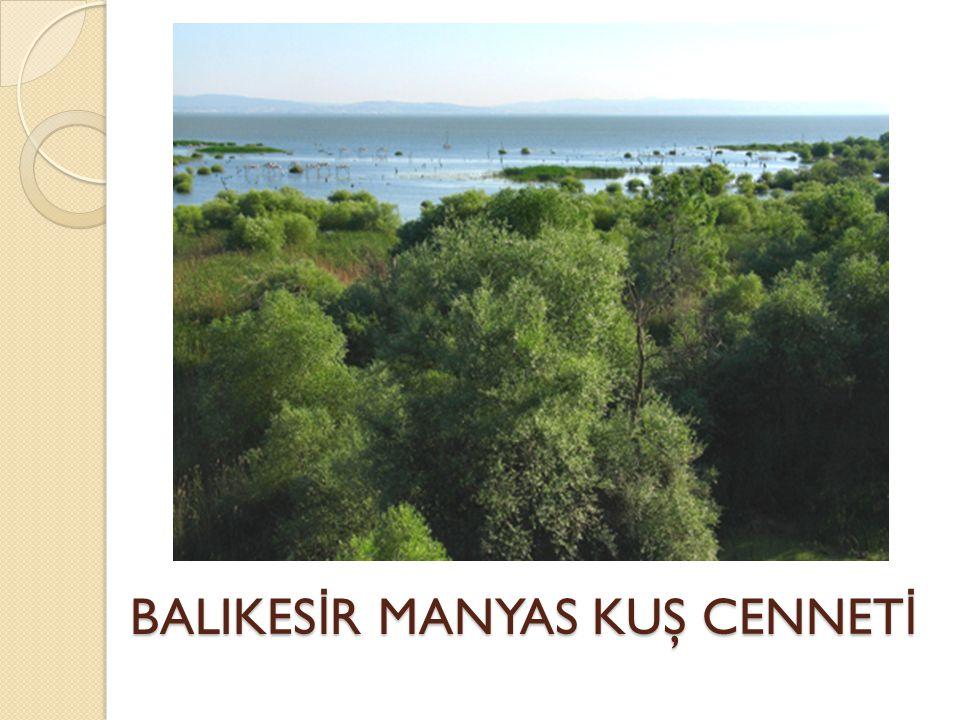 BALIKESİR MANYAS KUŞ CENNETİ