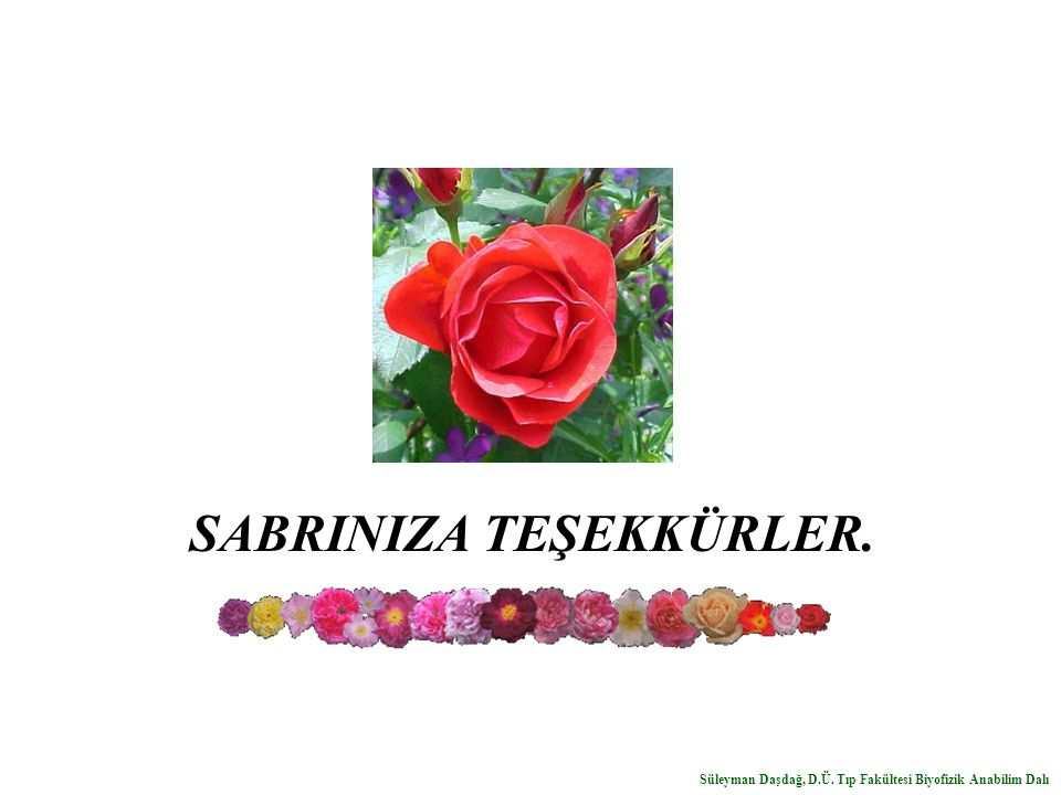 SABRINIZA TEŞEKKÜRLER.