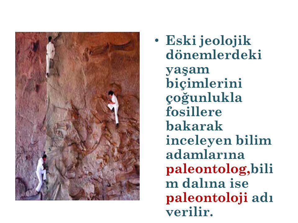 Eski jeolojik dönemlerdeki yaşam biçimlerini çoğunlukla fosillere bakarak inceleyen bilim adamlarına paleontolog,bilim dalına ise paleontoloji adı verilir.