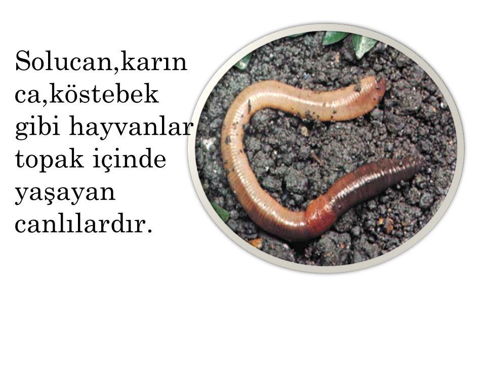 Solucan,karınca,köstebek gibi hayvanlar topak içinde yaşayan canlılardır.