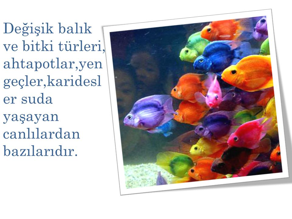Değişik balık ve bitki türleri, ahtapotlar,yengeçler,karidesler suda yaşayan canlılardan bazılarıdır.