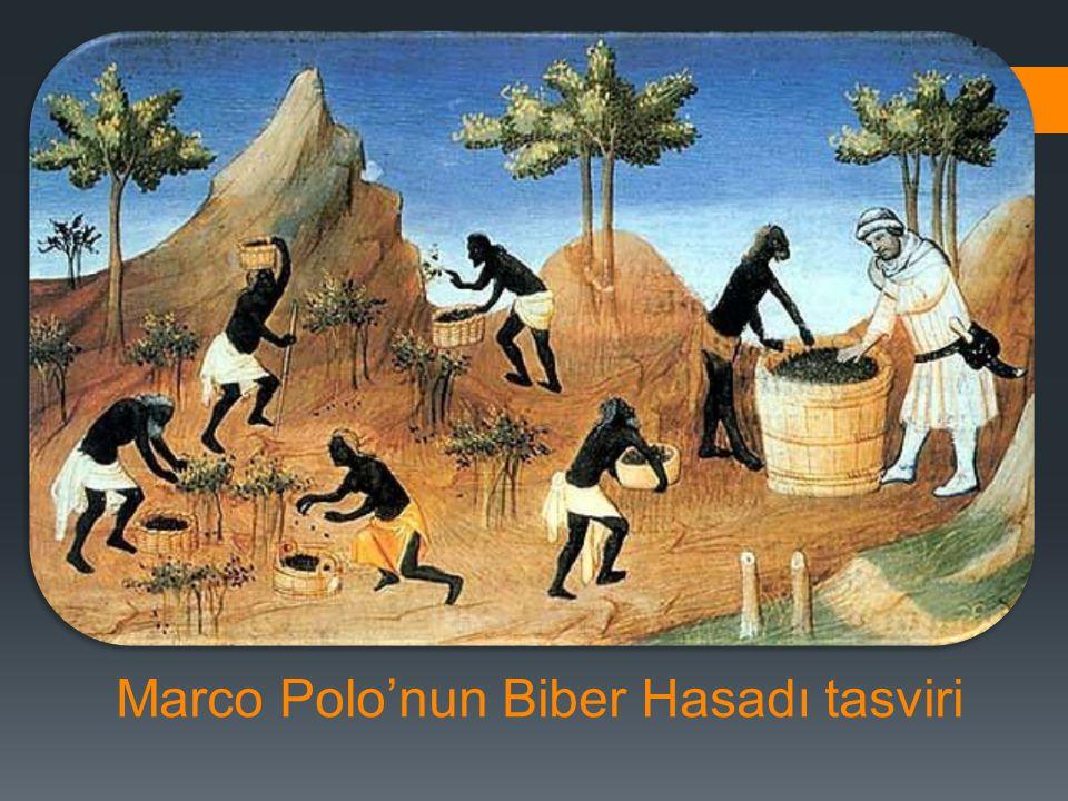 Marco Polo'nun Biber Hasadı tasviri