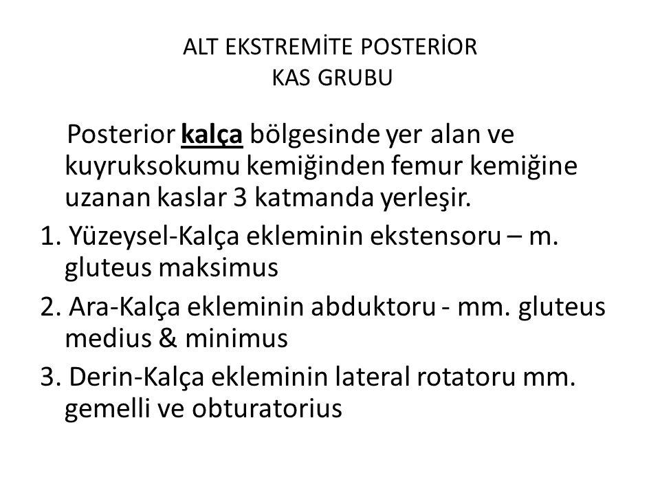 ALT EKSTREMİTE POSTERİOR KAS GRUBU