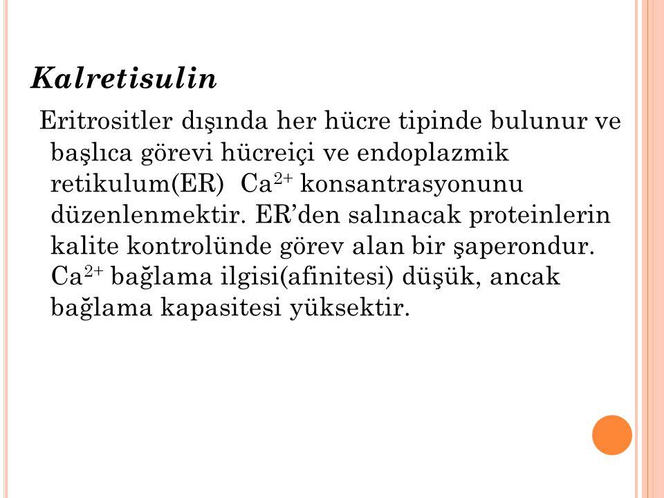 Kalretisulin