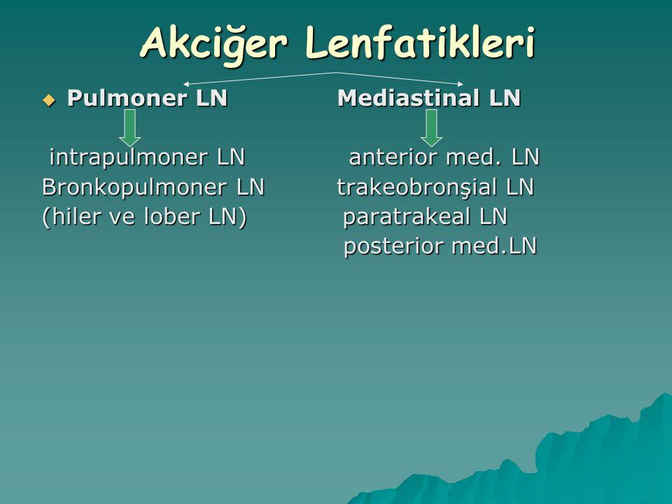 Akciğer Lenfatikleri Pulmoner LN Mediastinal LN