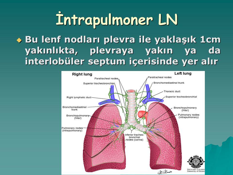 İntrapulmoner LN Bu lenf nodları plevra ile yaklaşık 1cm yakınlıkta, plevraya yakın ya da interlobüler septum içerisinde yer alır.
