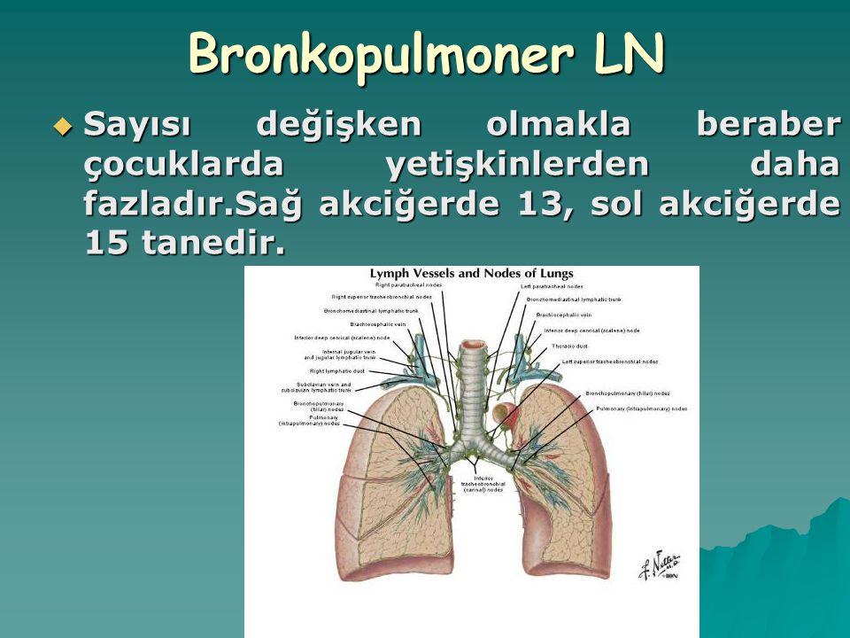 Bronkopulmoner LN Sayısı değişken olmakla beraber çocuklarda yetişkinlerden daha fazladır.Sağ akciğerde 13, sol akciğerde 15 tanedir.