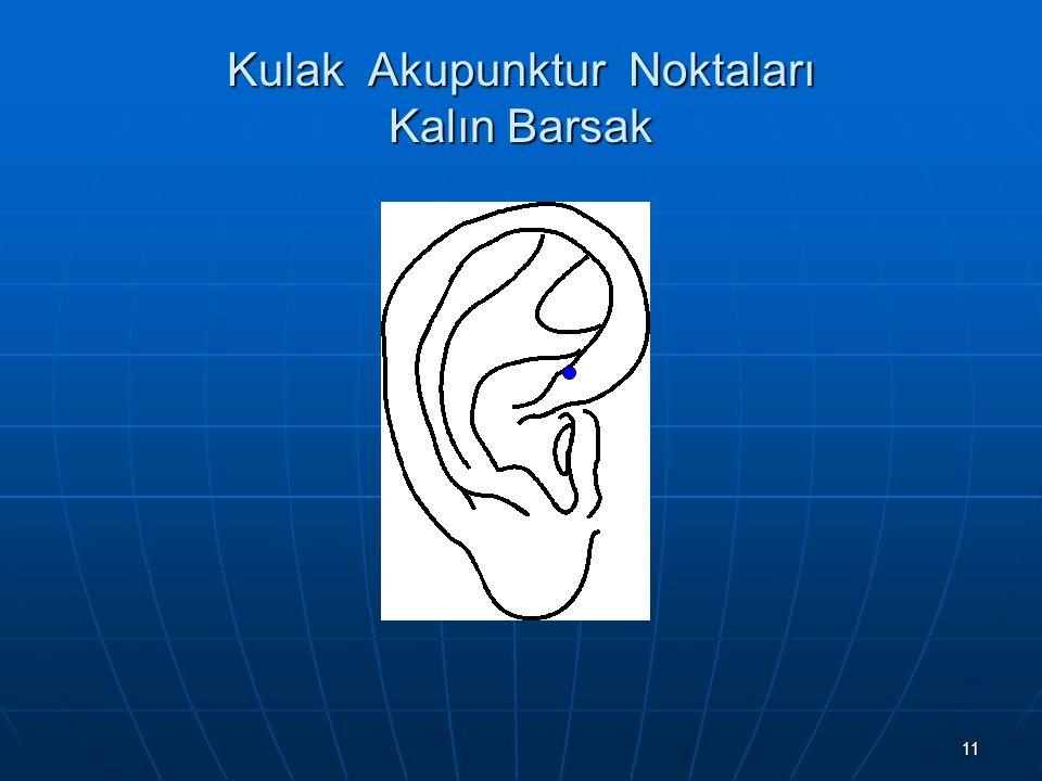 Kulak Akupunktur Noktaları Kalın Barsak
