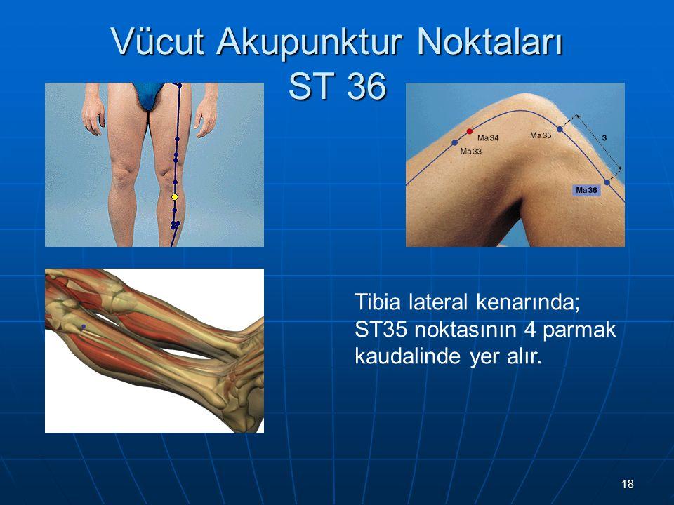 Vücut Akupunktur Noktaları ST 36