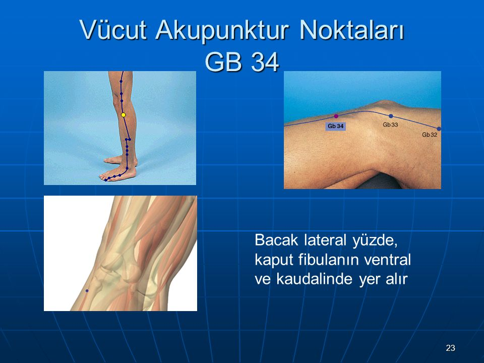 Vücut Akupunktur Noktaları GB 34