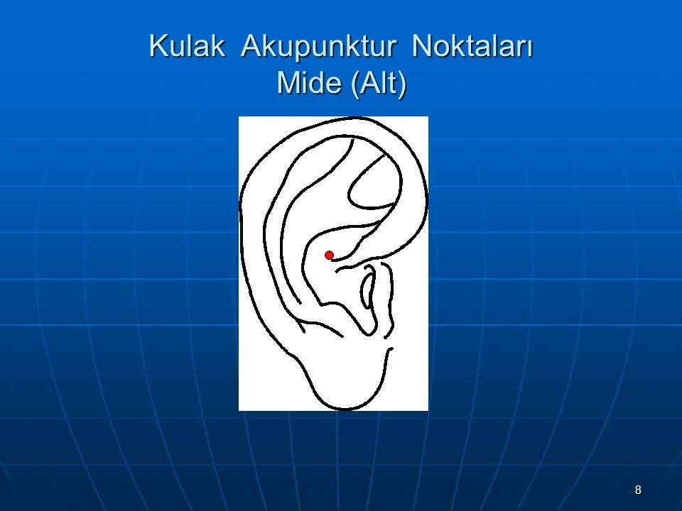 Kulak Akupunktur Noktaları Mide (Alt)
