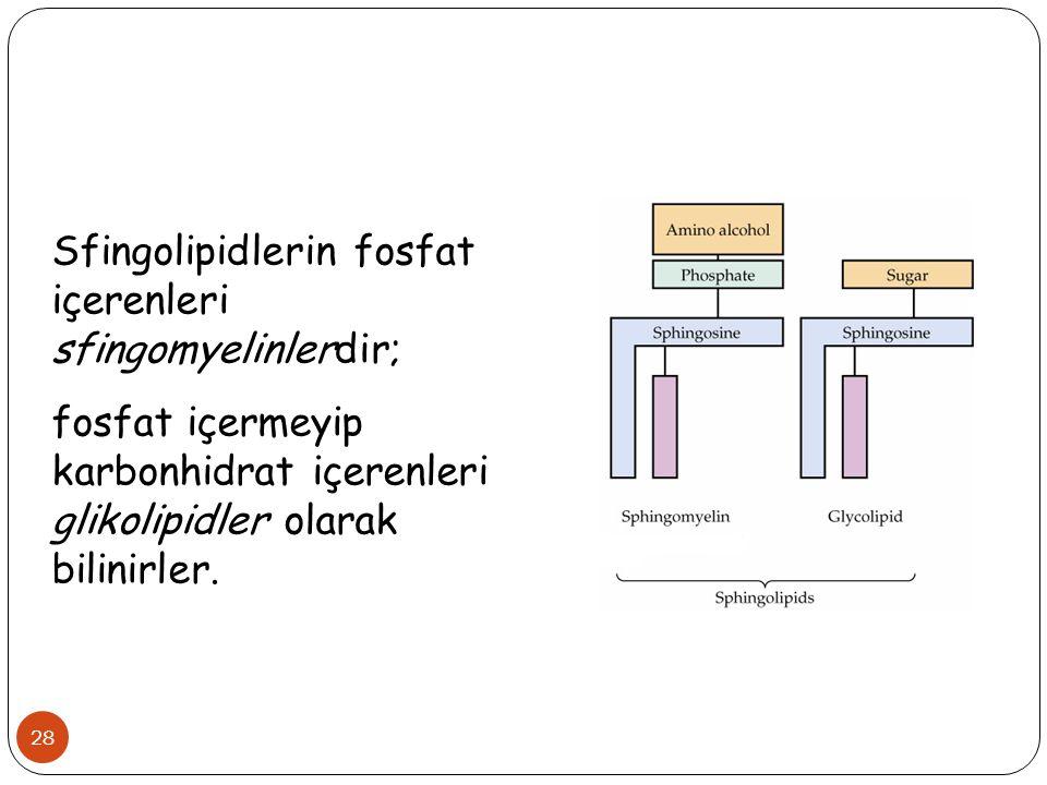 Sfingolipidlerin fosfat içerenleri sfingomyelinlerdir;