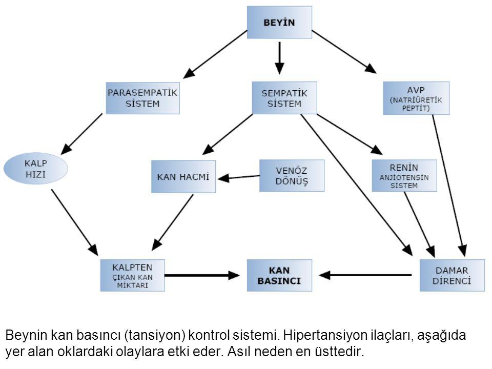 Beynin kan basıncı (tansiyon) kontrol sistemi