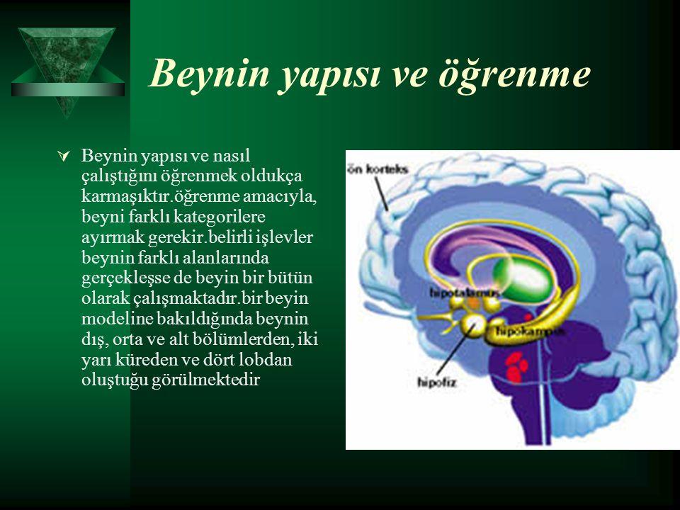 Beynin yapısı ve öğrenme