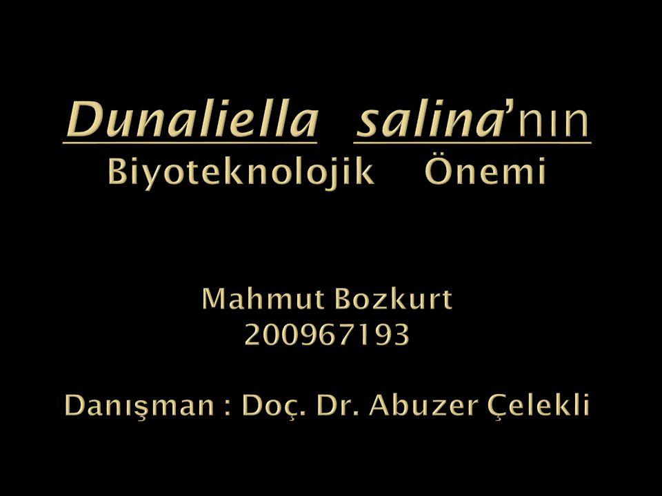 Dunaliella salina'nın Biyoteknolojik Önemi Mahmut Bozkurt 200967193 Danışman : Doç.