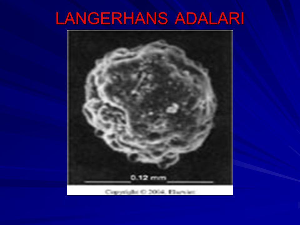 LANGERHANS ADALARI 100 mikron çapında yaklaşık 1 milyon elektron mikroskopisi